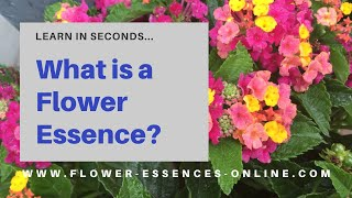 What is a Flower Essence