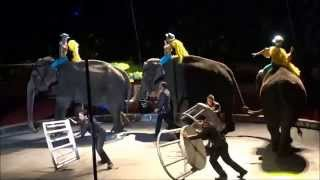 Zuhrah Shrine Circus