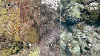 Curacao Seaquarium Time Series