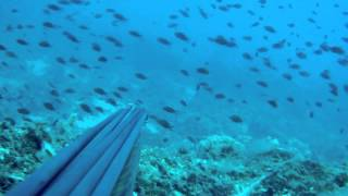 spearfishing gopro 92 degrees lens
