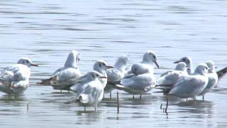 Migratory birds protected in China's Xinjiang
