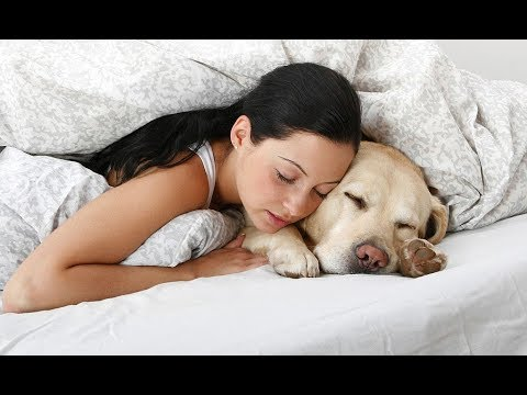 Dogs Sleeping with Owners Compilation 2017