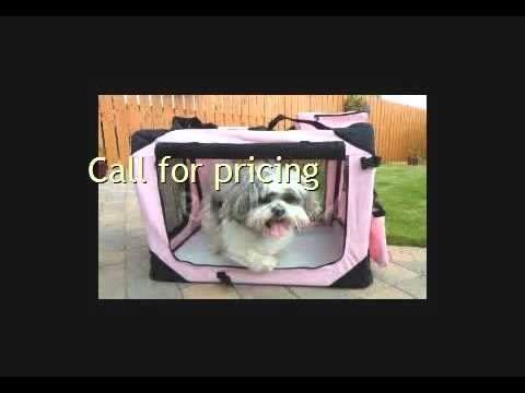Need Pet Transport To Cape Verde Call Animals Away