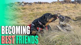 Who Says Cats Hate Dogs?! - Chilco Mountain Hike & Snowbirding South