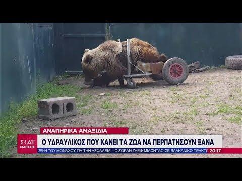 Ειδήσεις Βραδινό Δελτίο   Ο υδραυλικός που κάνει τα ζώα να περπατήσουν ξανά   16/02/2019