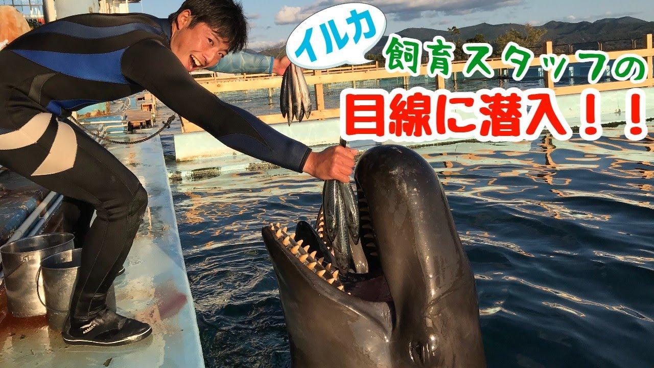 【スタッフ目線】ステージから見るクジラのジャンプ!