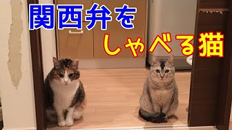 で 猫 弁 関西 しゃべる