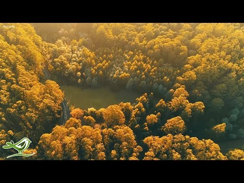 Beautiful Relaxing Music - Calm Piano Music & Guitar Music With Birds Singing