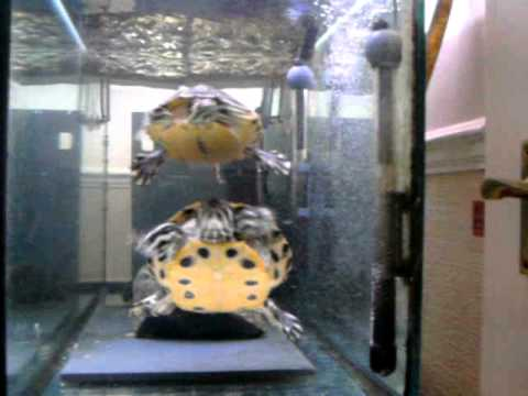 Ideal Turtle Terrapin Tank Set Up Youtube