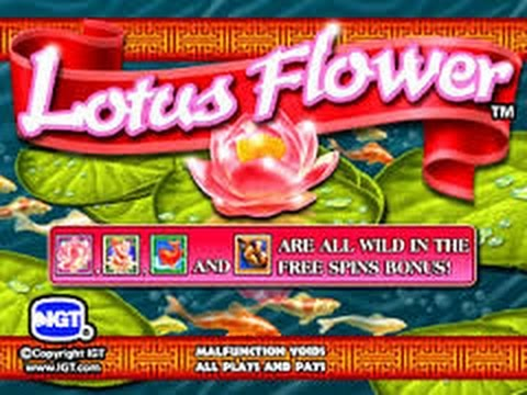 Lotus Flower Max Bet Bonus And Big Win Youtube