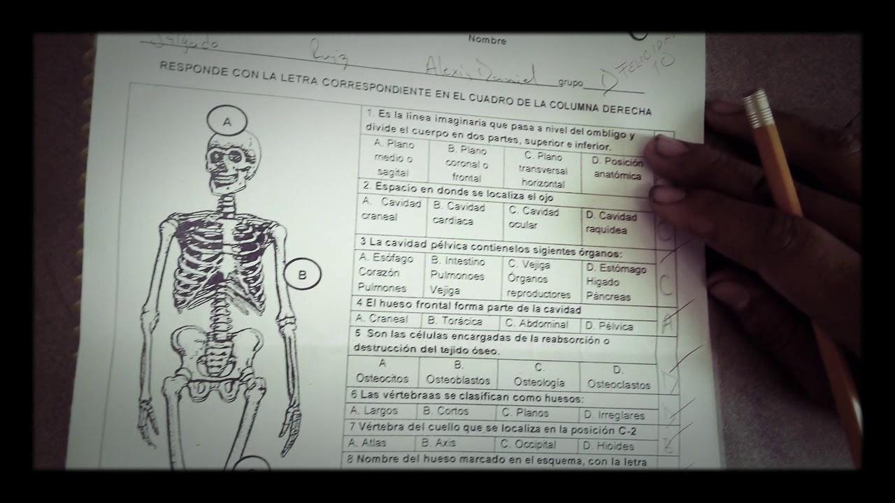 Mi examen de anatomía y fisiología 1 Easy saqué 10 - YouTube