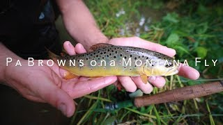Pa Browns on a Montana Fly | Fly Fishing a Dry Dropper for Wild Browns