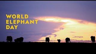 National Geographic World Elephant Day