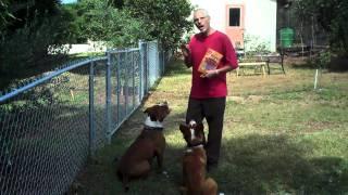 Casita Big Dog Rescue  - Treat Training