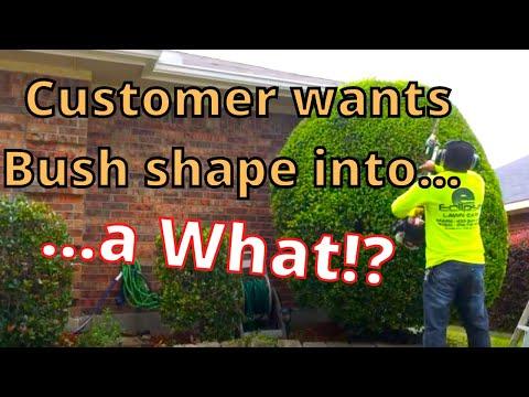 Doing Shrubs All Day Long! Vlog Shrub Service in Dallas,Tx