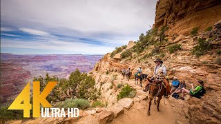 Grand Canyon National Park - 4K Documentary Film with Narration (English)