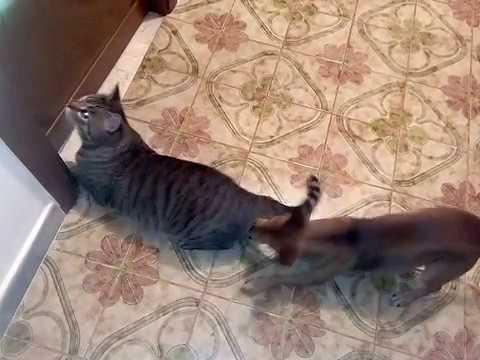 Cani e gatti divertenti che litigano insieme convivono in for Youtube cani e gatti