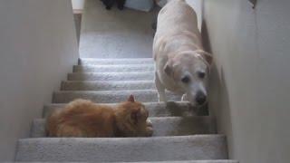 Коты обижают собак \ Cats scoff at dogs