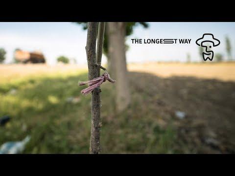 Walking through Iran - May 24th 2018: Protecting Trees, Bothering Grasshoppers