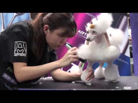 ARTERO Continental Poodle Clip Tutorial