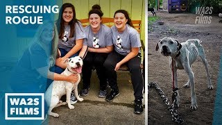 Chained Starving Dog Rescue Inspires Amazing Transformation - Hope For Dogs Like My DoDo