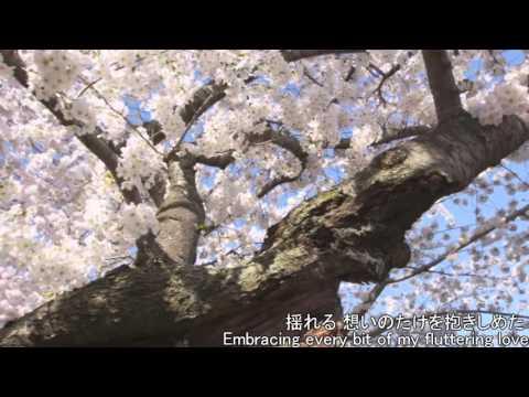 【serena☆】 SAKURA - Ikimono Gakari (cover)