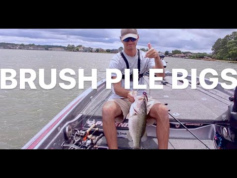 Lake Conroe Bass Fishing For BRUSH PILE BIGS!! (Over 23 Pounds!!!)