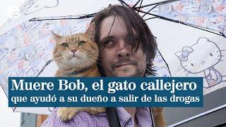 Un gato callejero llamado bob pelicula
