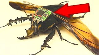 10 BIZARRE Attempts to Weaponize Insects!