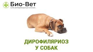 Дирофиляриоз у собак. Ветеринарная клиника Био-Вет.