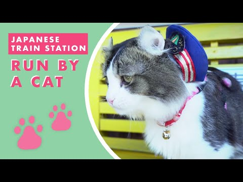 Japan's Train Station: Run By A Cat