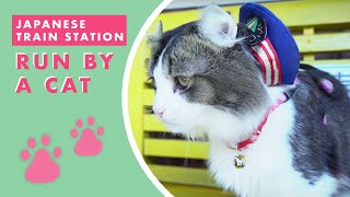 Japan's Train Station: Run By A Cat thumbnail