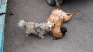 Это любовь. Животная любовь