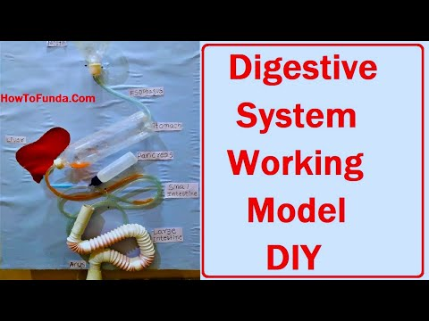 digestive system working model for school science fair project | science exhibition | howtofunda