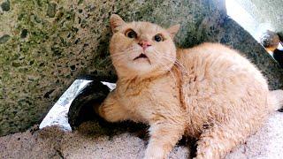 我救出了一隻被困在魚陷阱中的流浪貓