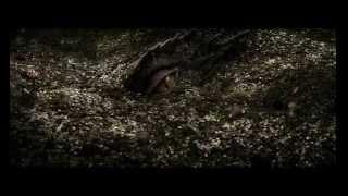 Мельница Дракон клип