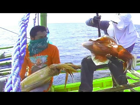 GIANT SQUIDS! CAUGHT ON TRADITIONAL HANDLINE FISHING I FISHING IN THE PHILIPPINES