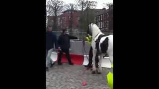 HORSE HUMPS COP! (Video)