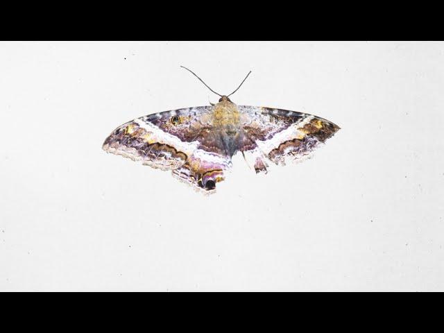 kendrick-lamar-alright-instrumental-erik-giovani