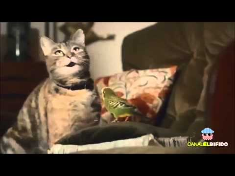 s e katzen singen happy youtube. Black Bedroom Furniture Sets. Home Design Ideas
