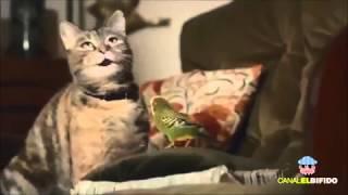 """Süße Katzen singen""""Happy"""""""