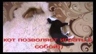 Демодекоз у собаки(, 2015-06-01T17:29:21.000Z)