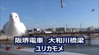 【阪堺電車】大和川橋梁 ユリカモメがたくさん