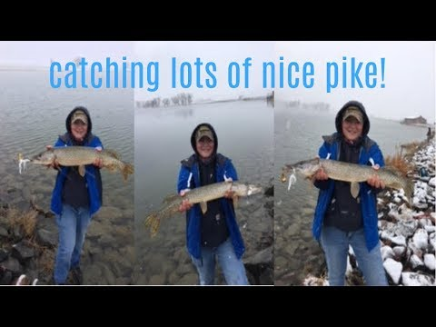 Fishing Opening Day At Rocky Moutain Aresenal For My PB Northern Pike! Colorado Pike Fishng!