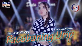 Download lagu Intan Chacha - Pacobaning Urip [ OFFICIAL ]