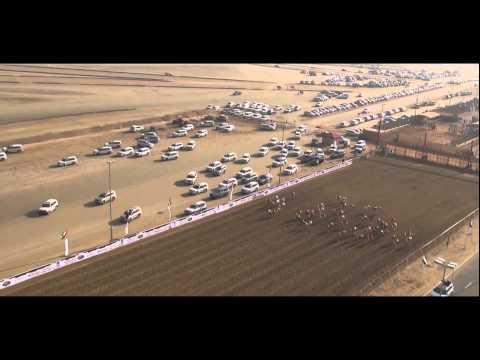 Camel Races Festival Abu Dhabi - 2014 - HD Broadcast - www.flyworx.ae