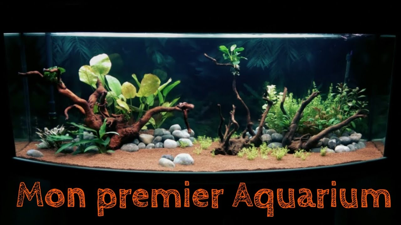 aquarium aquatlantis 450 litres aquascaping jisey. Black Bedroom Furniture Sets. Home Design Ideas