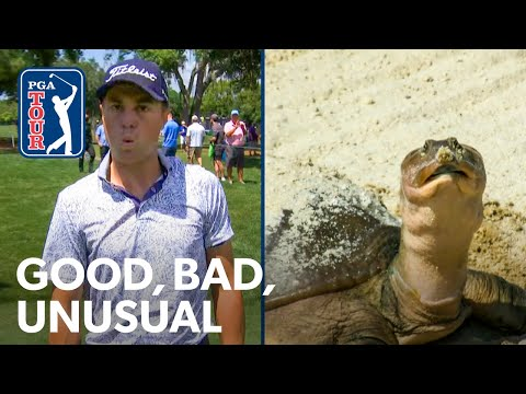 A puzzled turtle, JT gets robbed, record hole-outs & Hovland hits lefty