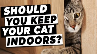 Should You Keep Your Cat Indoors? | Tips From A Vet