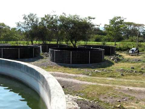 Acuacultura estanques circulares youtube for Piscina de peces
